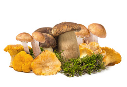 Mix ciuperci de padure
